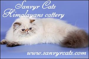SanvyrCats[1].