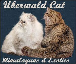 Uberwald_Cat_Ban1 ( my banner)