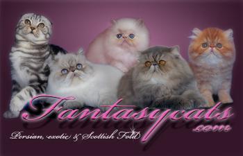 bannerfantasycats